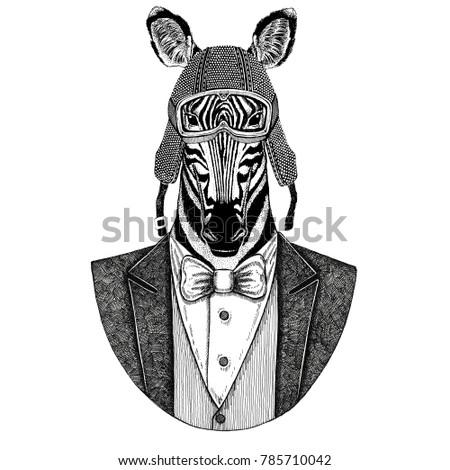 14c495edd Zebra Horse Animal wearing jacket with bow-tie and biker helmet or aviatior  helmet. Elegant biker