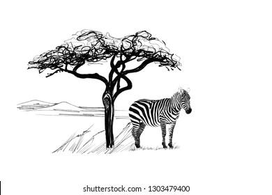 Zebra near a tree in africa. Hand drawn illustration. Collection of hand drawn illustrations (originals, no tracing)