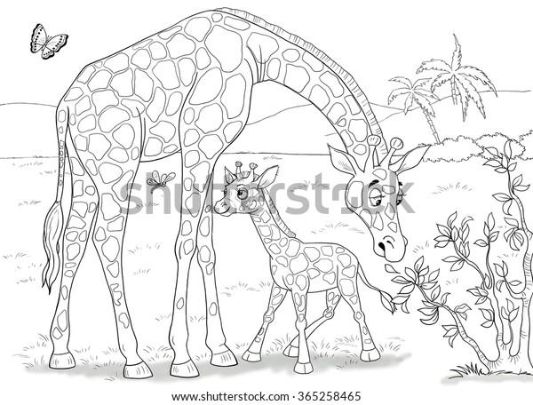 Hayvanat Bahcesine Afrika Nin Hayvanlari Zurafalar Sevimli Stok