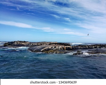 the seal island