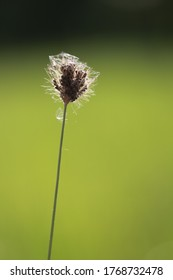 Close up Flower of grass in the rice field