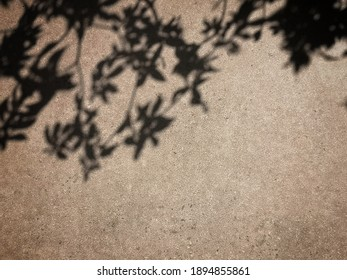 The shadow of tree leaves on grunge cement wall