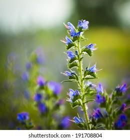 Kvetinkov�¡ - Shutterstock ID 191708804