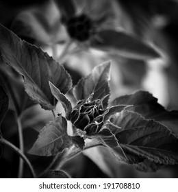 Slne?nica - Shutterstock ID 191708810