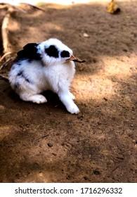 01/01/2019. Rabbit Farm Bukit Matanoi, Apin-Apin, Sabah. A cute rabbit pose.