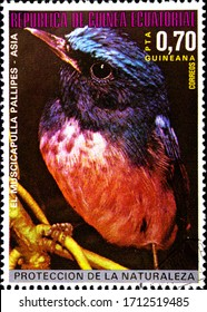 02.09.2020 Divnoe Stavropol Territory Russia postage stamp Equatorial Guinea 1976 Asian Birds Rufous-bellied Niltava Niltava sundara black bird with red breasts sitting on a branch