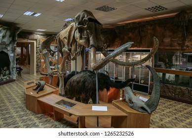 07.08.2018, Yakutsk, Russia. Interior of the national museum of Yakutsk. Skeleton of mammoth in the museum.