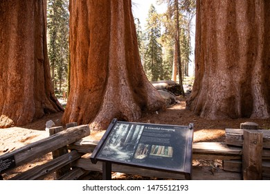 07/27/2019 - Sequoia Park, CA: Information Board in the Giant Sequoias Forest. Sequoia National Park in California Sierra Nevada Mountains
