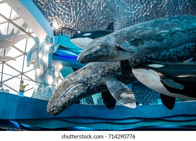 08 July 2017, RUSSIA, VLADIVOSTOK : Whale in architecture in city in the aquarium Vladivostok, Russia