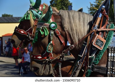 09/15/2019, in Moosburg / Bavaria, the traditional Autumn Show with the Autumn Show Pageant takes place for the 95th time. The tradition has existed since 1924. Decorated carriage horses pull a wagon.