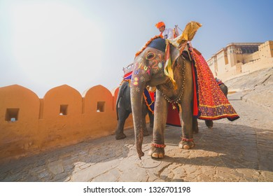 1 Jan 18 : Unidentify Travellers ride elephant to Amber Palace, Jaipur, Rajasthan - India