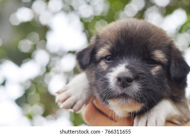 1 month old mixed breed dog