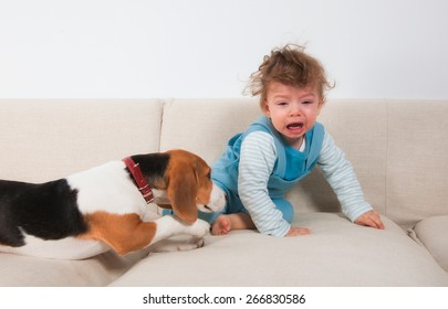 1 year old baby boy crying because his pet wants to play.