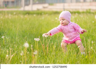 1 year old baby girl cautiously touching dandelions