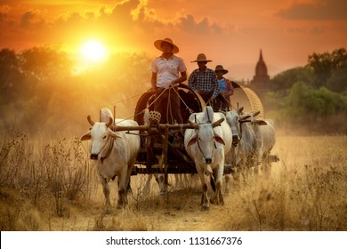 10 Mar 2016 Myanmar Mandalay Bagan The tradition cows cart with cowboy this is lifestyle of people's at Old Bagan pagoda  and service the tourist