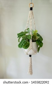 A 100 percent cotton macrame plant hanger that is hand made displayed on a white wall. It is holding a prayer plant inside of a white ceramic pot.
