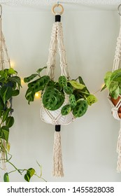 A 100 percent cotton macrame plant hanger that is hand made displayed on a white wall. It is holding a prayer plant inside of a white ceramic pot. Other hangers are beside it with string lights.