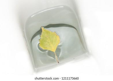 10.24.2018: Brackel, Germany: A leaf in a toilet