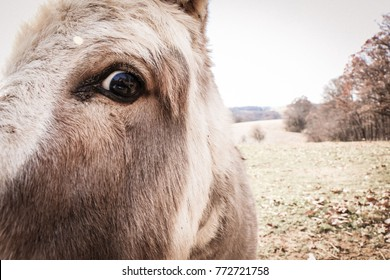 11/29/2017. Glen Rock, United States. Donkey getting up close and personal.