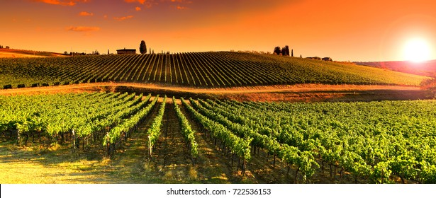 12 August 2017: Beautiful Vineyard at sunset near Village of Quarate, Chianti region in Tuscany. Italy