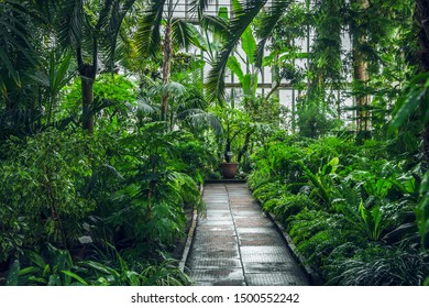 12 June 2019 Riga, Latvia, Botanical garden: Greenhouse inside with green plants. Many green plants in pots after watering. Perspective picture.  Tropical green collection.