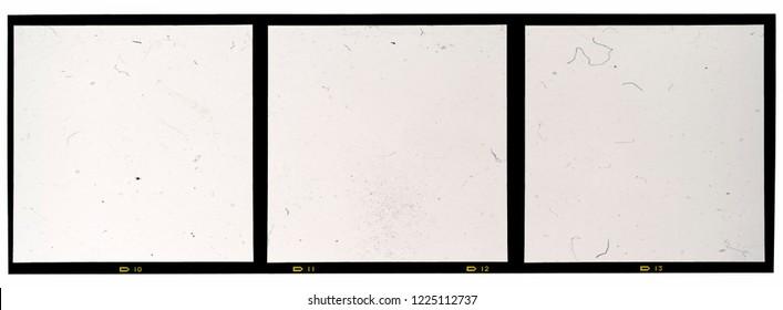 120mm middle or medium format analog film frame or strip on white background, real 6x6 frame scan, film grain