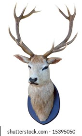 13 Point deer head isolated with clipping path