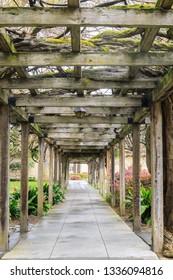 140 years old Wisteria Vine Walkway in Santa Clara Mission. Santa Clara, California, USA.