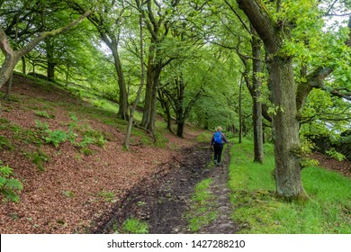 16/06/2019 A Dales High Way between Skipton and Addingham Yorkshire Dales. into the woods above Skipton