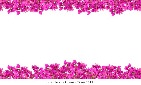 16:9 Pink bougainvilleas flower frame.Seamless in the horizontal direction. You can get the border as long as you want combining the left side to the right.