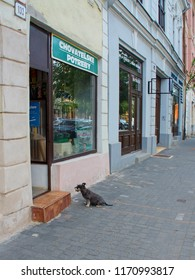 16.august 2018, Trnava, Slovakia Little dog sits on the street in front of a pet store and awaits his master.