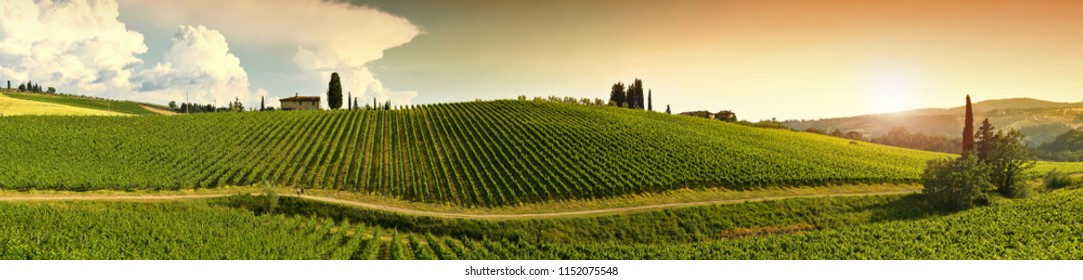17 June 2018: green vineyards with farming house in tuscany countryside near Greve in Chianti (Florence). Chianti region in Tuscany, Italy.