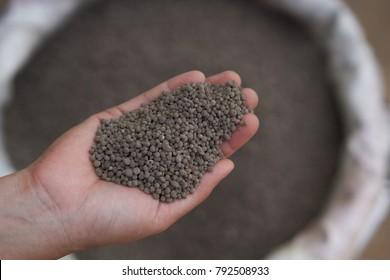18-46-0 , Diammonium phosphate (DAP) fertilizers in farmer hand . Fertilizer for plant.
