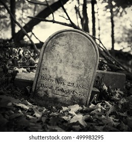 A 19th century headstone surrounded by dry leaves and trees in a spooky forest. Black and white filter applied.