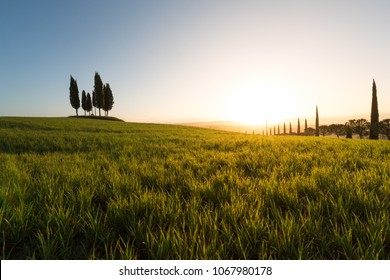1st April 2018, Pienza, Tuscany, Italy. Springtime landscape and sun bust on Cypress trees on the stunning rolling hills of Val d'Orcia, Unesco World Heritage