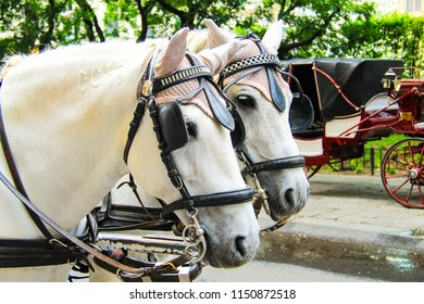 2 beautiful horses in harness stand on a street in Vienna, Austria, Europe. Horse head.
