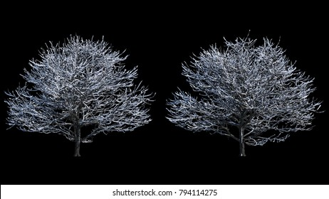 2 blowing on the wind beautiful full size winter trees with snow isolated on with black and white luminance matte, perfect for digital composition