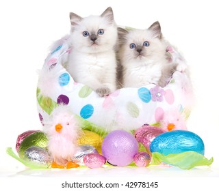 2 Cute Ragdoll Kittens In Large Easter Egg With Smaller Eggs On White Background