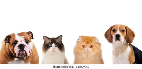 2 dogs and 2 cats portraits looking strait forward, on white isolated background.