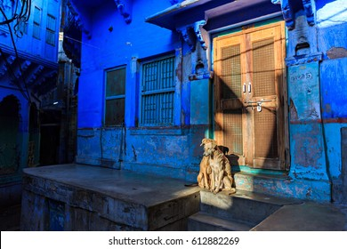 2 dogs sitting on the sun in front of a door in the Blue City of Jodhpur, Rajasthan , India