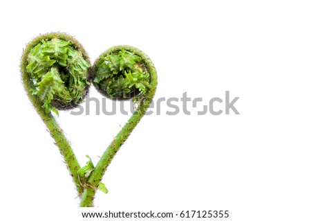 2 fern frond twisted to make a heart shape on a white background