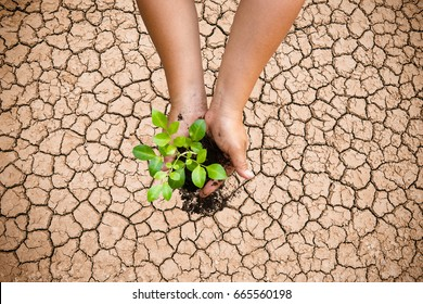 2 hands planted trees on broken soil,Arid,Drought conditions.