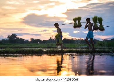2 Little smiling boys farmer on green fields. holding baby rice prepare for padding in the evening.