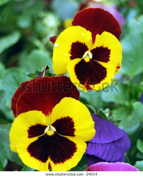2 lovely flowers