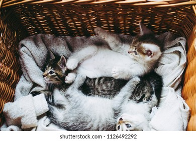 2 month old kittens in the basket