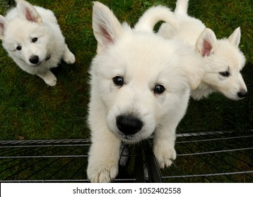 Shepherd Siblings Images, Stock Photos & Vectors | Shutterstock