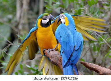 2 parrots are fighting in the forest