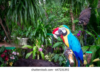 2 parrots on a branch in the jungle