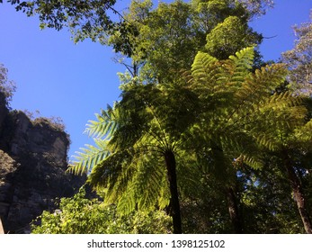 2 Tree ferns in katoomba park in the blue mountains