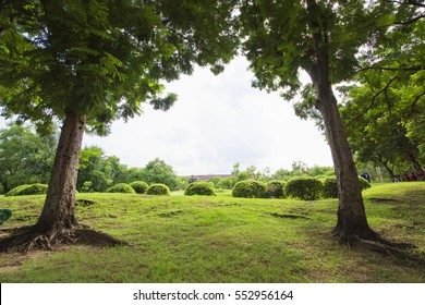 2 tree green field